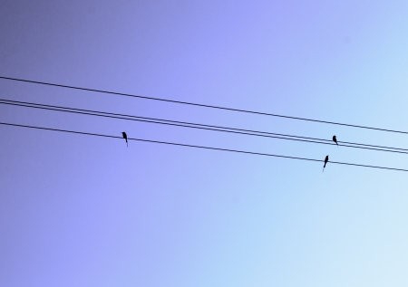 Birds sitting on line photo