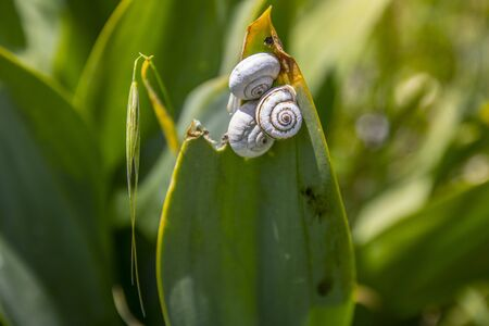 a group of snails climbing at a leaf in Jordan