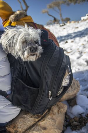 cute Glen dog was feeling cold and hiding into hiking backpack