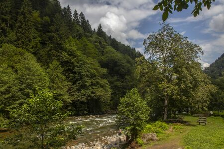 the beauty of nature in Rize- Turkey where you can find green forest and flowing rivers