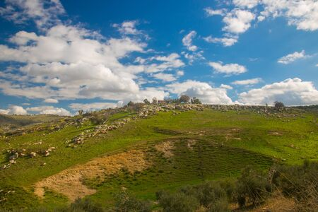 the beauty of the spring in sunny day with cloudy sky in Irbid in the north of Jordan Banco de Imagens