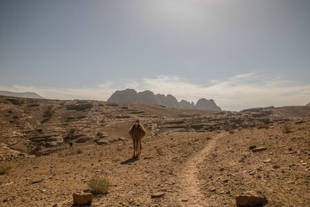 camel was walking in Petra Desert in the south of Jordan Banco de Imagens