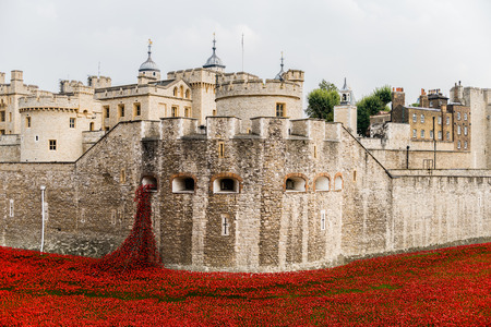 the majesty: Red poppies in the moat of the Tower of London