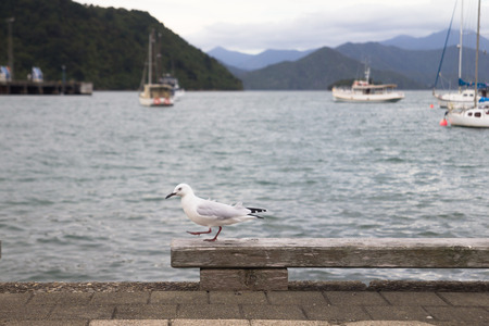 seaport: SEAGULL AT SEAPORT
