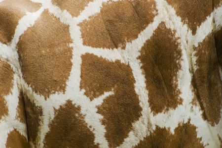 Abstract Patterns Of Giraffe photo