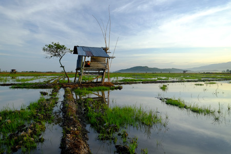an old cottage on the edge of a paddy field with palm trees