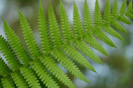 Green fern in a tropical Stock Photo
