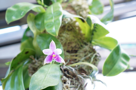 cherish: Orchids