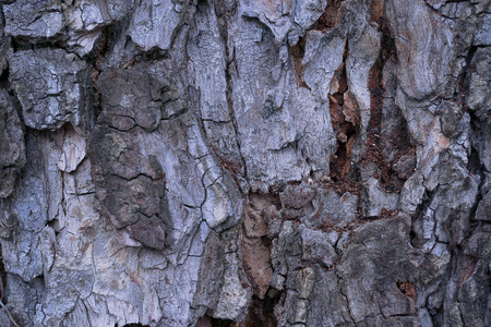 bark: Old wood texture of tree bark. Vector illustration.