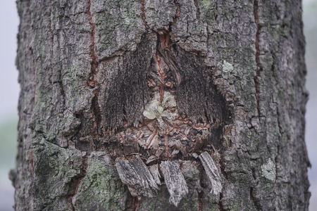 bark: Conservation of environment concept. Old wood texture of tree bark. Plant diseases.