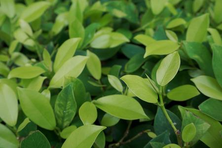 hojas antiguas: Conservaci�n del concepto de medio ambiente. Textura verde de la hoja. Foto de archivo