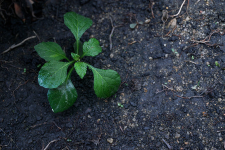 small plant: A small plant in soil-New life. Small plant.