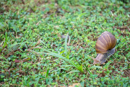 Land snail is one of snail species that live on land, as opposed to sea snails and freshwater snails. It is a common name for terrestrial gastropod molluscs that have shells.