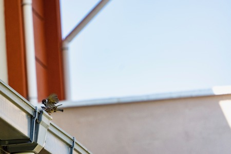 Environment conservation concept. Bird on the roof. Animal, love and freedom concept.  Stok Fotoğraf