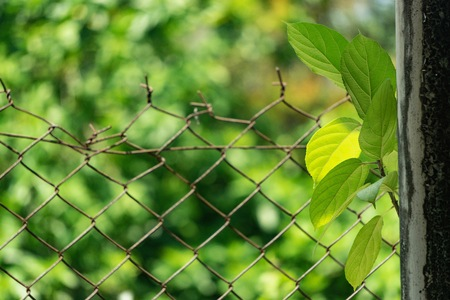 Texture and pattern. Plant behind the fence. Security and safety concept. Nature concept background. Environment conservation concept. Tropical and nature.  Stok Fotoğraf