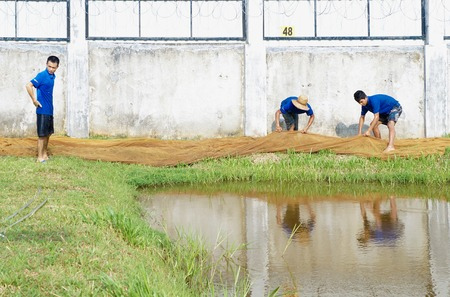 Shot of daily activities in pet fish farm. Catching farm breed arowana. Arowana is one of famous pet fish and became trending in Asia. 