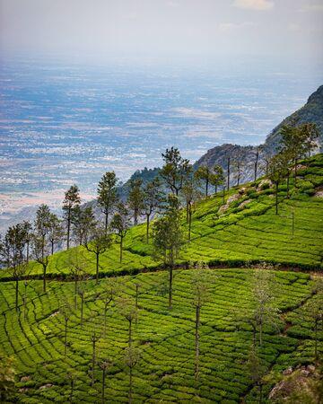 hill sloop tea estate beautiful landscape view