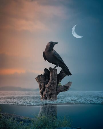 crow standing on tree branch floating on sea evening moon underwater fantasy Zdjęcie Seryjne