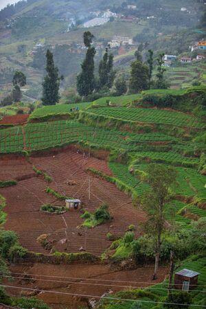 tea estate top view in India, vertical