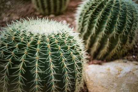 Cactus in Plant Nursery Stock Photo