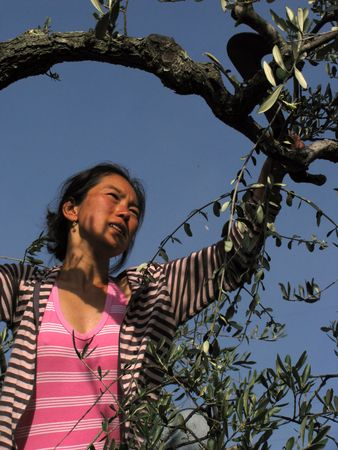 a girl on pink striped tanktop cutting olive tree branches photo