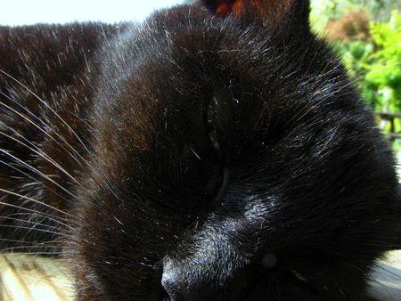commune: a sleeping cat in arrout