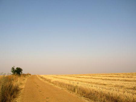 camino: camino de santiago