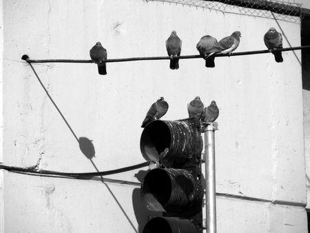 traffic lights and birds photo