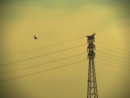 electric wires and a bird photo