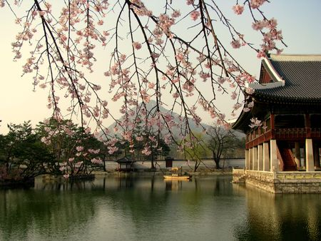 japan sky: cherry blossoms in a palace in seoul
