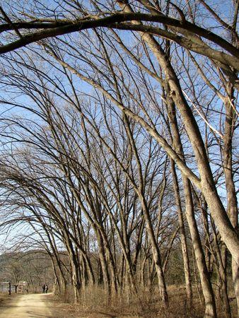 schlagbaum: Winter-Baum auf der Straße Lizenzfreie Bilder