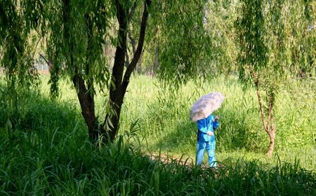 a woman with umbrella walking under the willow tree photo