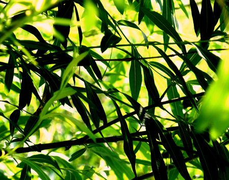 green leaves in summer photo