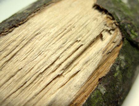 discontinuity: a broken log