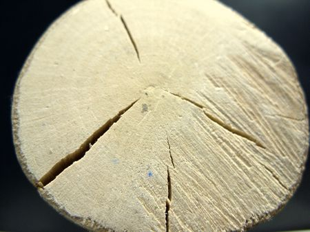 discontinuity: crack appears in a timber