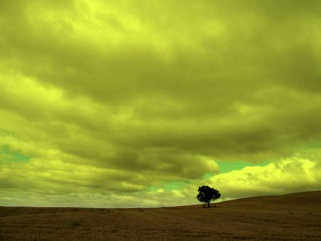 a lonely tree in a deserted field under the clouds on the road to santiago
