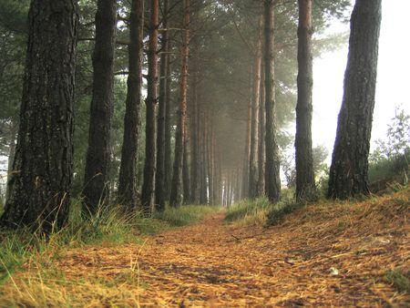 pilgrimage: misty road on the pilgrimage to santiago