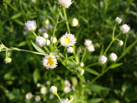 blumen: yellow and white colored wild flowers in bloom Stock Photo