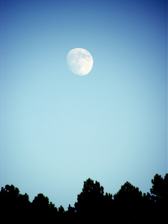 irradiated: almost full moon in the sky above the forest
