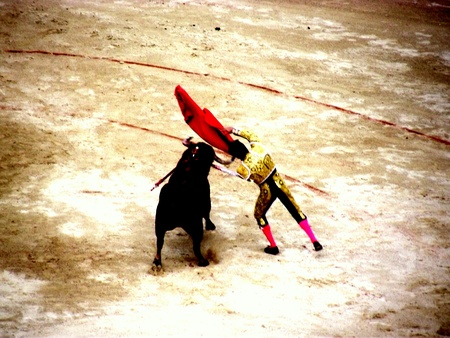 living thing: bullfight in nimes in france