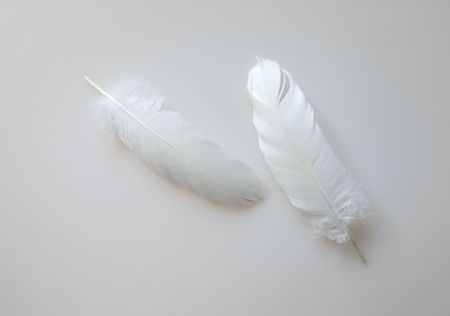 Still life with two delicate feathers, on white background Stock Photo