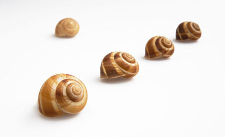 still life with five brown snailshells isolated on white background