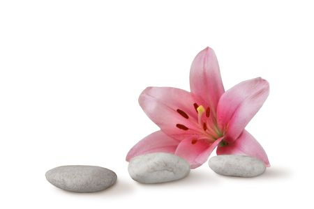 wellness still life pebbles and pink lily, high key studio shot