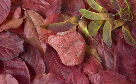red pebble: red pebble on red leaves,seeds of maple trees, autumn still life, close up studio shot