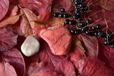 red pebble: red pebble on red leaves with elderberries, autumn still life, close up studio shot