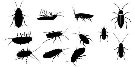 Cockroach insect icons set on white background