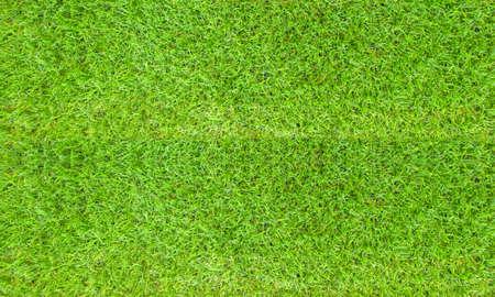 Texture fresh spring grass field Photo background 스톡 콘텐츠