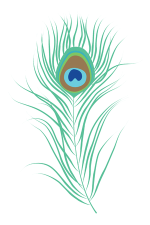 feathering: Peacock feather. Isolated vector illustration
