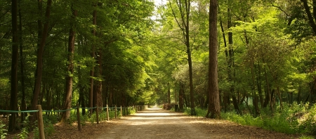 albero: Viale al parco