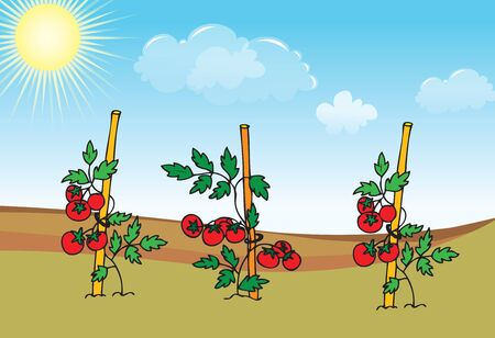 Tomato seedlings growing in the garden, with blue sky vector illustration.